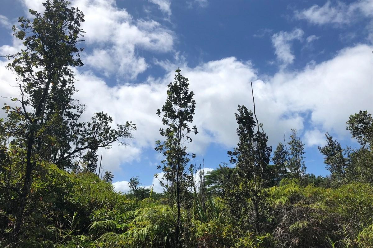 ハワイアンパラダイスパーク土地不動産画像1