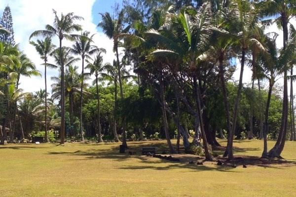 ハワイアンビーチズ土地不動産画像20